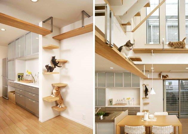 casa-gatto